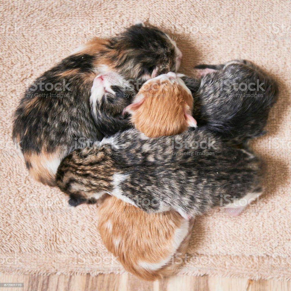Newborn litter of kittens. stock photo