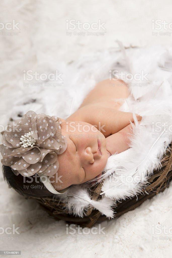 Newborn sleeping in nest royalty-free stock photo
