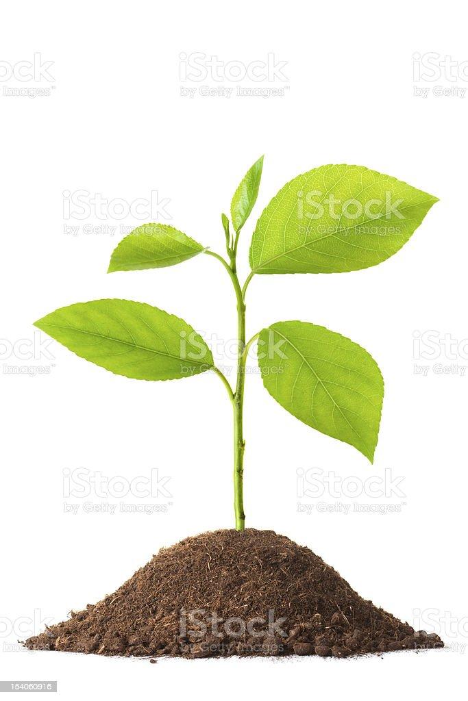 Newborn small green plant stock photo