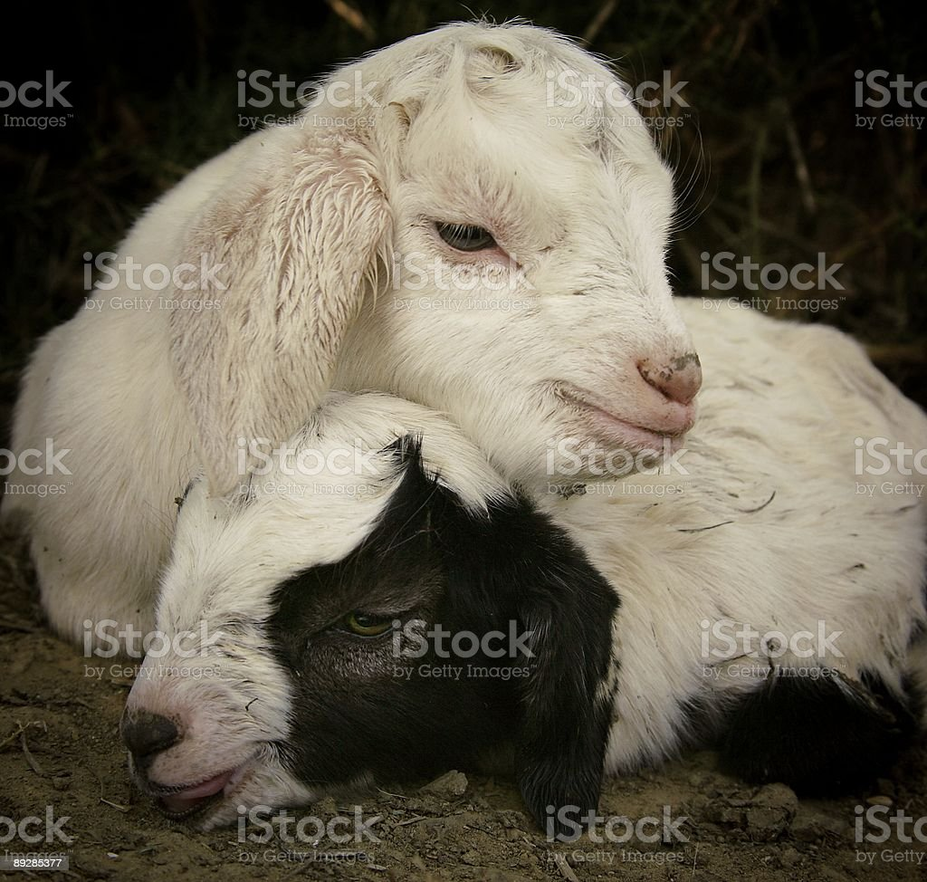 Newborns royalty-free stock photo