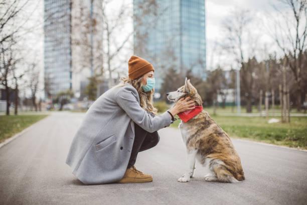Neuer allein, wenn Sie Hund haben – Foto