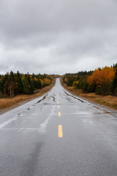 Newfoundland Scenic road during a cloudy day in the Fall Season. Taken in Northern Newfoundland, Canada. middle of the road stock pictures, royalty-free photos & images
