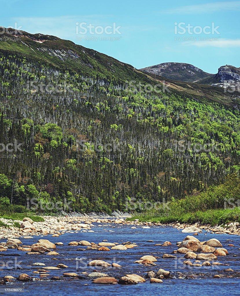 Newfoundland River royalty-free stock photo