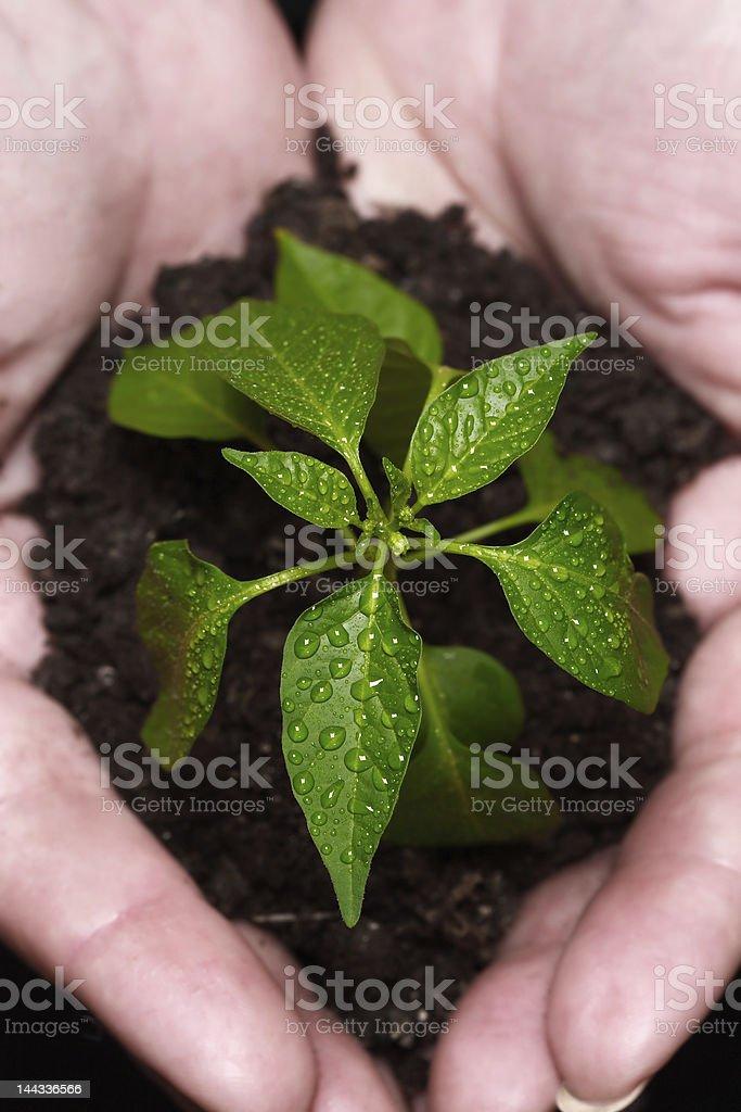 newly born plant royalty-free stock photo