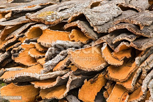 Newly cut cork oak bark, Sardinia, Italy. The bark of the Quercus suber-tree cork oak) the primary source of cork for wine bottle stoppers.