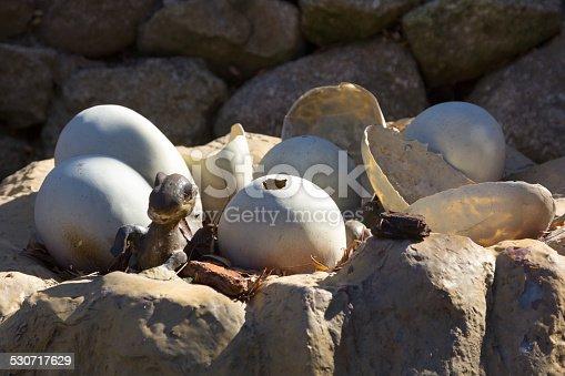 istock Newly hatched dinosaur eggs 530717629