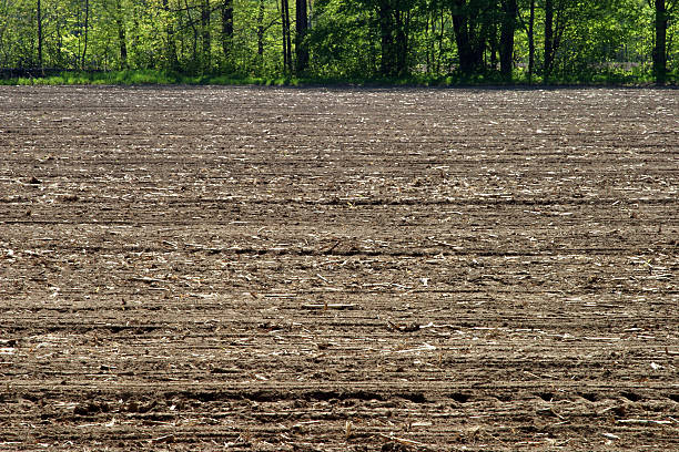 Newly Planted Field stock photo
