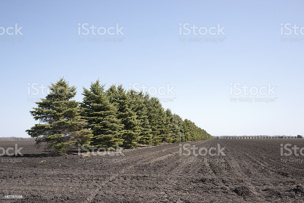 newly planted field with evergreen wind break royalty-free stock photo