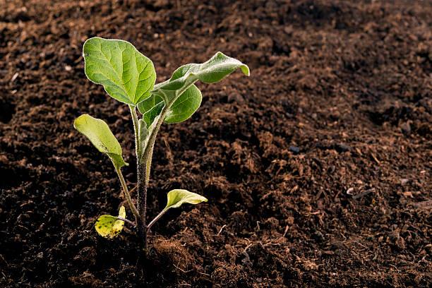Neu Setzlinge gepflanzt – Foto