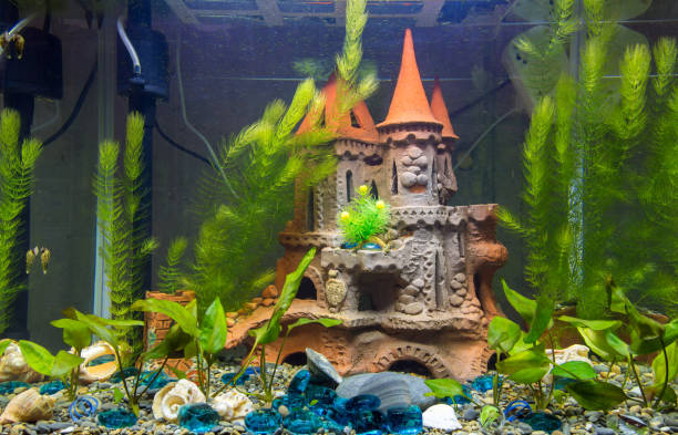 newly populated fresh aquarium with planted algae, no fish - home aquarium stock pictures, royalty-free photos & images