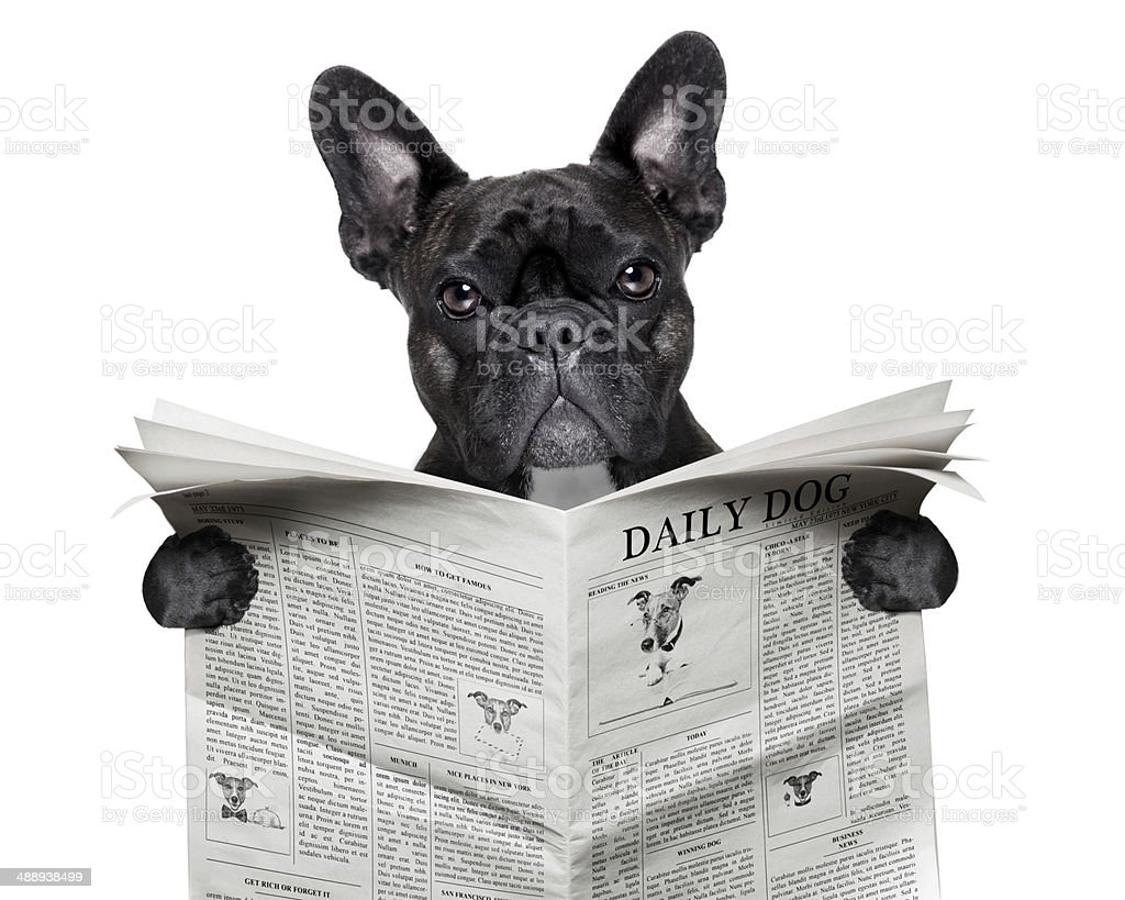 newspaper bulldog stock photo
