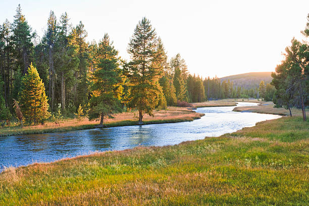 nez perce creek im yellowstone national park bei sonnenuntergang - bach stock-fotos und bilder