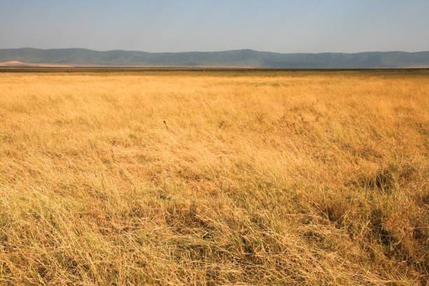 Ngorongoro Crater landscape, Tanzania. stock photo