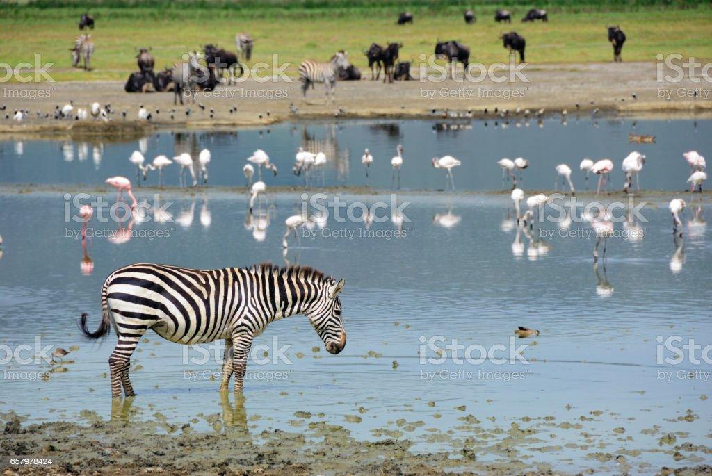 Ngorongoro stock photo