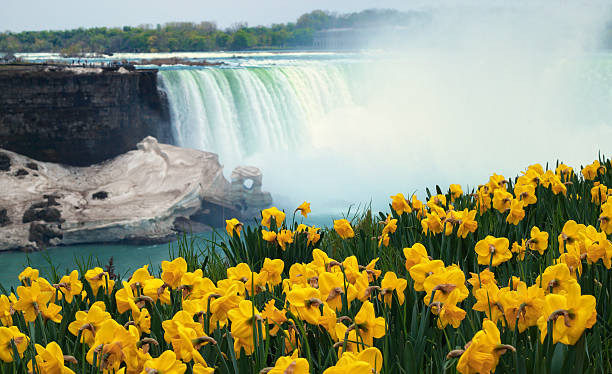 niagara falls spring flowers and melting ice - niagara falls stock photos and pictures
