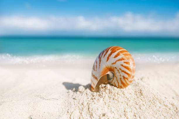 nice and shine sea shell on  beach with perfect seascape stock photo