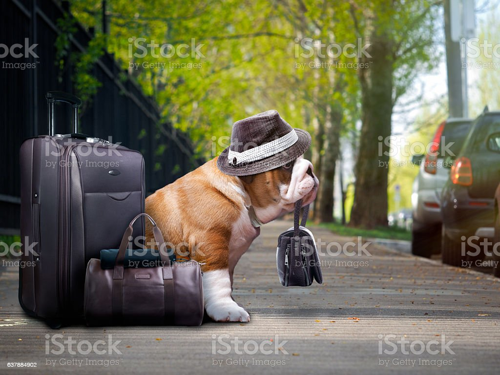 nice big dog with a suitcase. стоковое фото