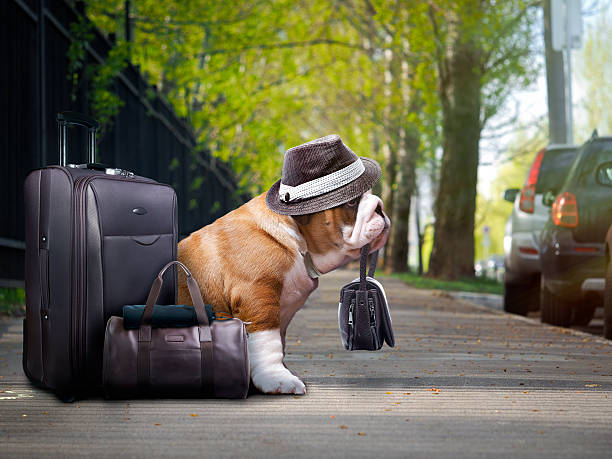 nice big dog with a suitcase. stock photo