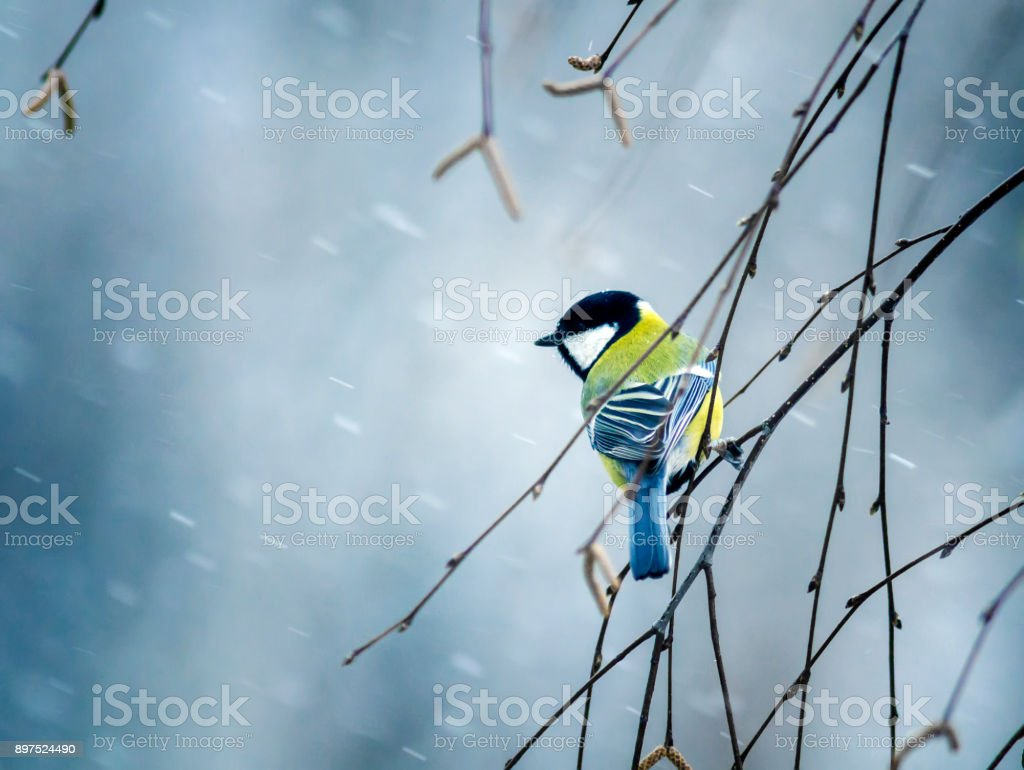 nice bird the bird sit on a branch in winter forest in the snow stock photo