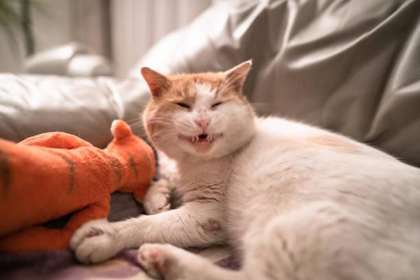 Nice cat portrait on the sofa picture id1299227733?b=1&k=6&m=1299227733&s=612x612&w=0&h=5vf5uvcb0mrc zoypq1yhv4q8ftizqwshe17r6nmf i=