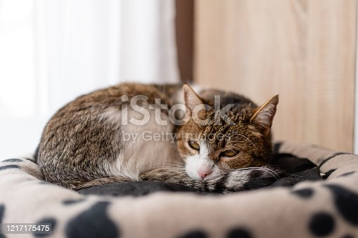 nice cat relaxing at home