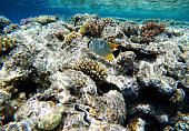 Nice coral reef with a cute fish