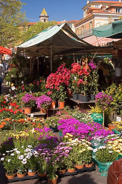 schöne flower market - lila, grün, schlafzimmer stock-fotos und bilder