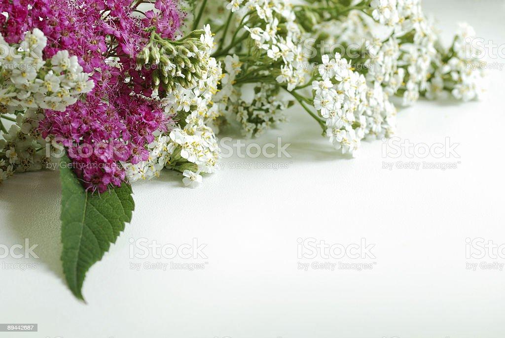 nice flowers royalty-free stock photo