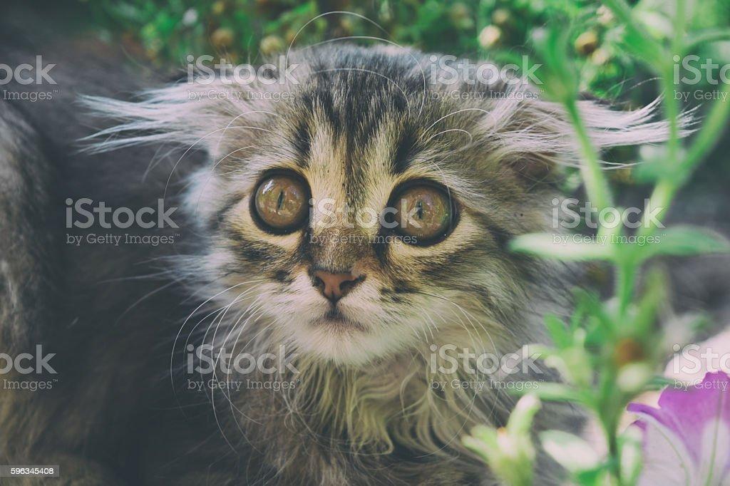 Nizza flauschige Kätzchen Lizenzfreies stock-foto