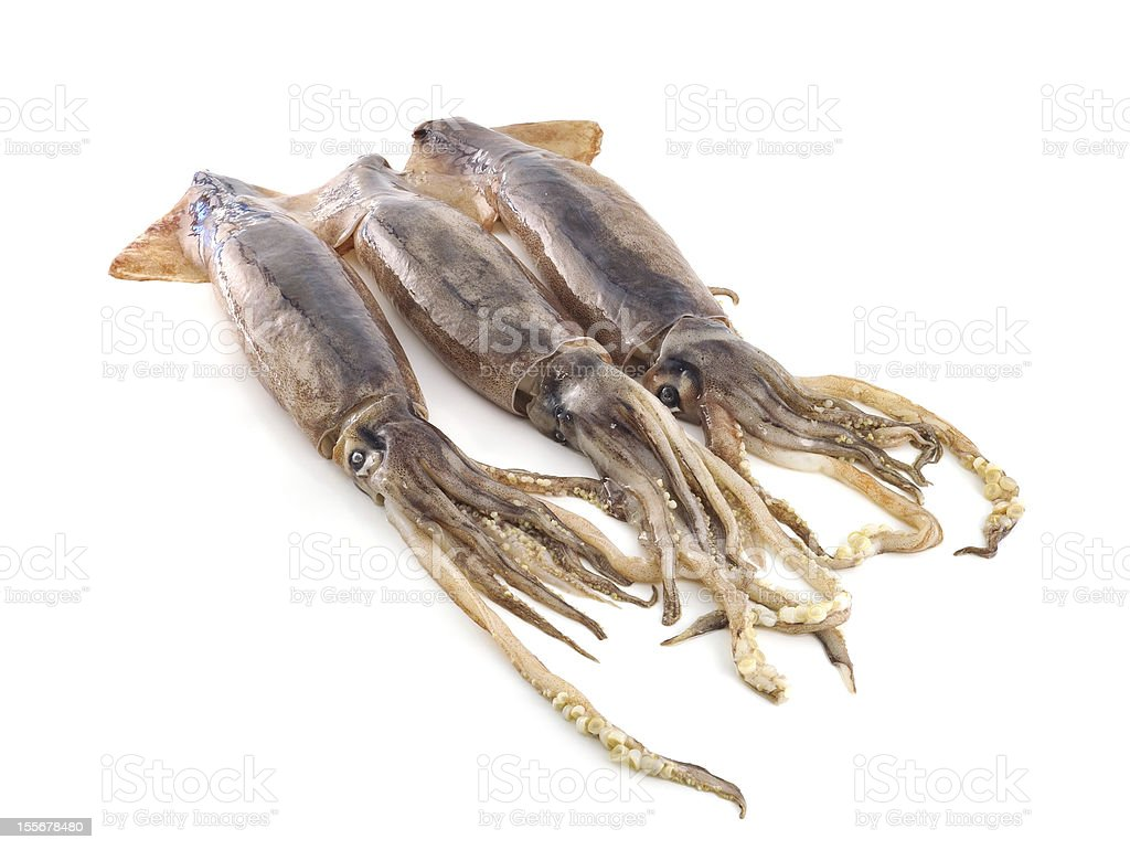 nice fresh squid isolated on white background royalty-free stock photo