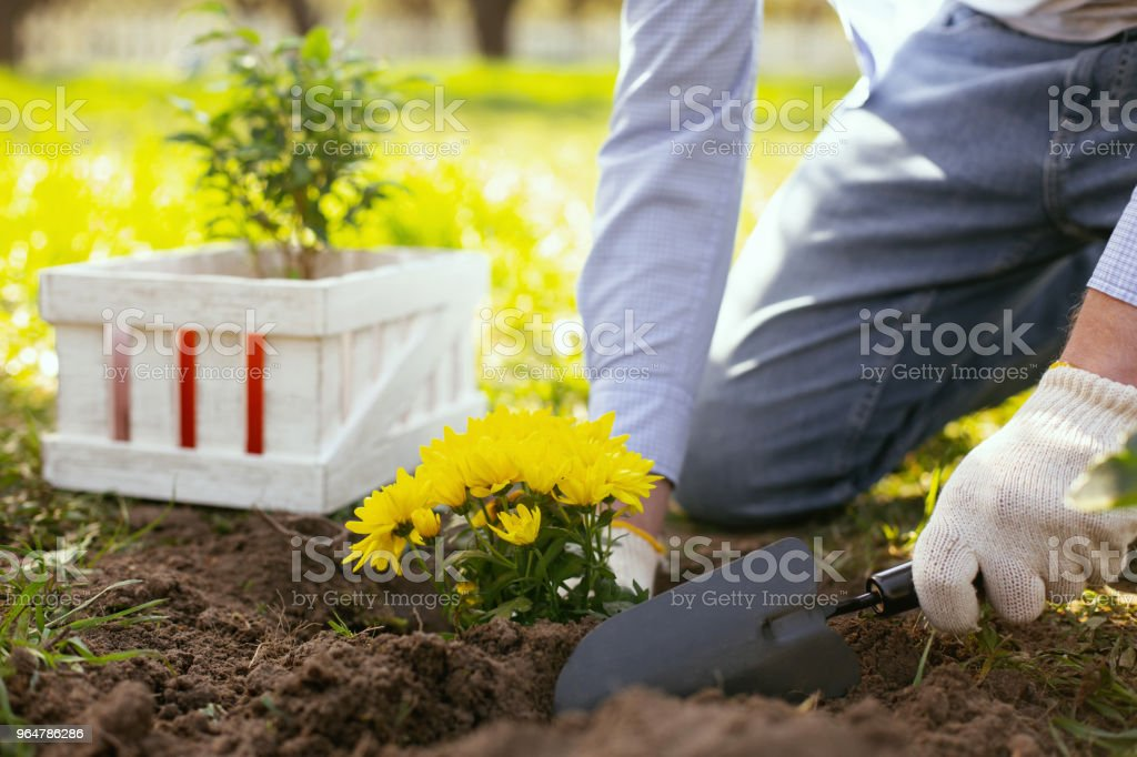 Nice hard working man planting flowers royalty-free stock photo