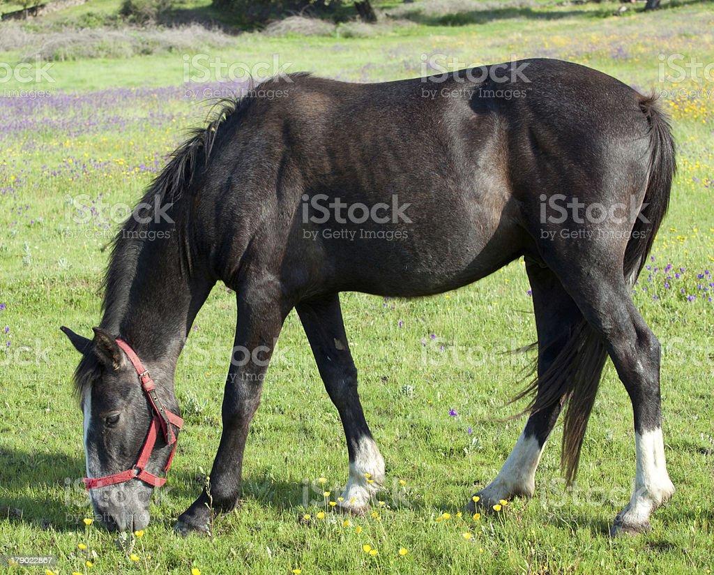 Nice horse royalty-free stock photo