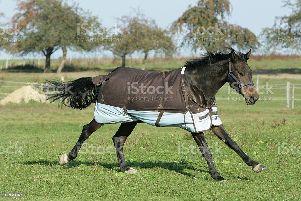 Nice horse running stock photo