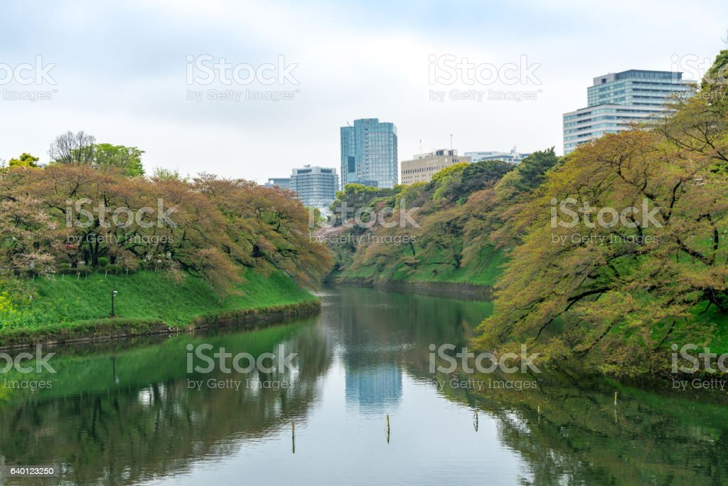 Nice lake in the nice park in Tokyo stock photo