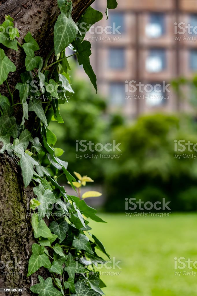 A nice office builing with a beatiful green lawn on background and a tree at foreground zbiór zdjęć royalty-free