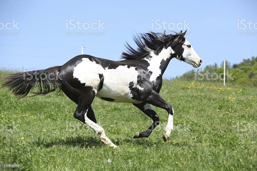 Nice paint horse stock photo
