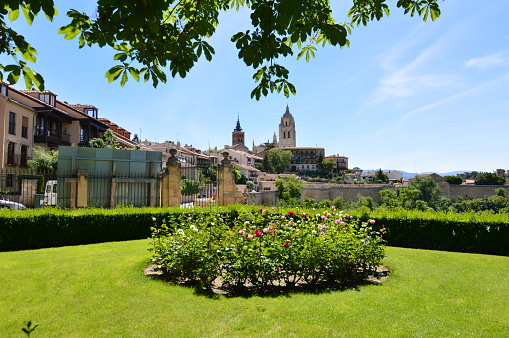 Nice Photo With The Bell Tower Of The Cathedral And The Old Quarter Behind A Rosebush In Segovia.