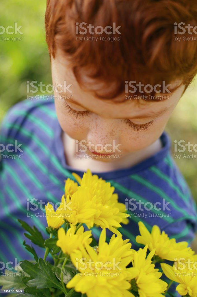 Nice pleasant boy looking at the flowers royalty-free stock photo