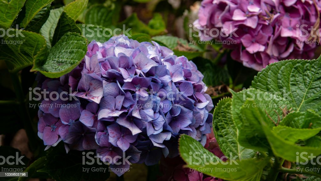 Nice purple flowers stock photo