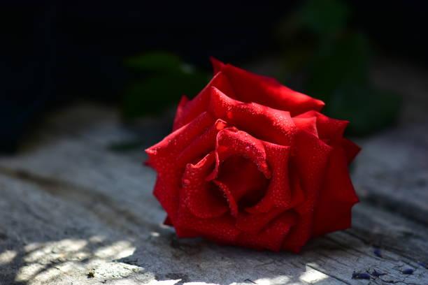 Schöne rote Rose auf Holztisch – Foto