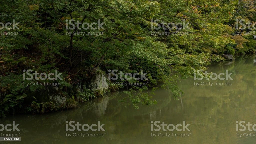Nice Shape Of Maple Trees Stock Photo Download Image Now Istock