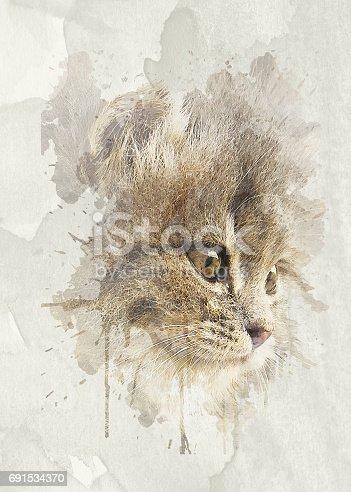 istock Nice soft cat close-up portrait 691534370