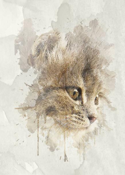 Nice soft cat closeup portrait picture id691534370?b=1&k=6&m=691534370&s=612x612&w=0&h=6kiwhvmfyrtvzb6scrx953snemlc2yrgeenu6v1poh8=