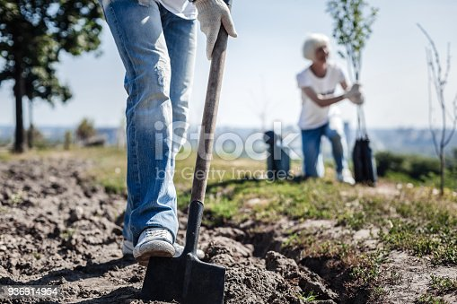 In the garden. Nice pleasant strong man holding a spade and digging in the garden while planting a tree