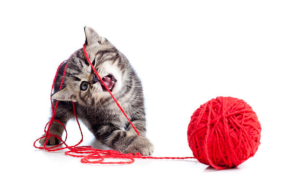 Nice tabby kitten playing red clew or ball picture id157494782?b=1&k=6&m=157494782&s=612x612&w=0&h=r ktaawzr4ycychs9waryuiwsblau6lxgfkbdjhqywm=