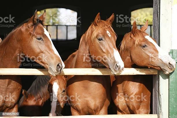 Nice thoroughbred fillies standing at the stable door picture id629957520?b=1&k=6&m=629957520&s=612x612&h=um83nxwuvyjmr0sdkxqzu5vj0gvykb0gnndderprsw0=
