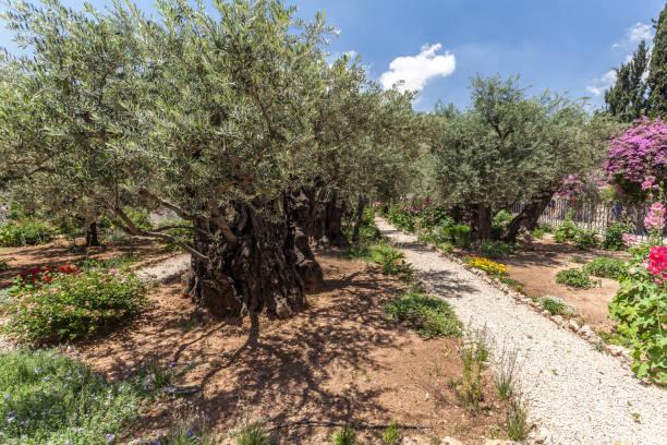 Nice view of garden Gethsemane stock photo