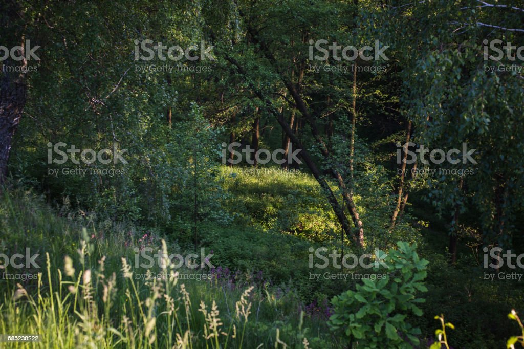 Nice view of the ravine. Summer green background. Landscape foto de stock royalty-free