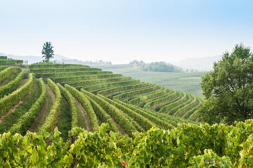 Wonderful vineyard valley landscape in zone of Collio in region of Friuli Venezia Giulia, north East of Italy.