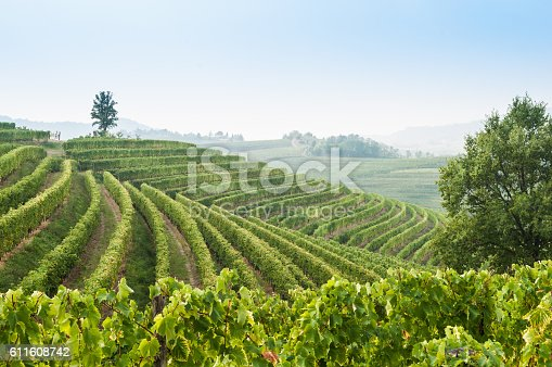Wonderful vineyard valley landscape in zone of Collio in region of Friuli Venezia Giulia, north East of Italy.